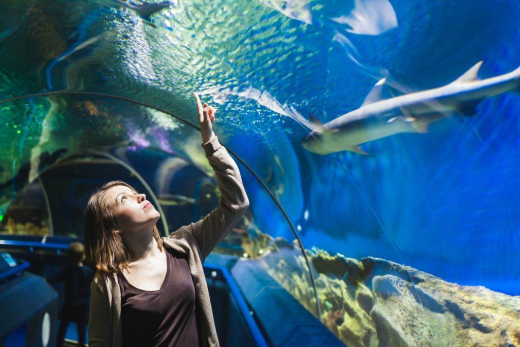 Ripley's Believe It or Not Aquarium, Toronto