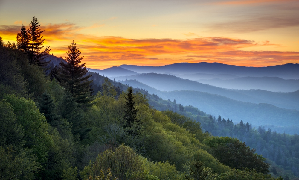 Great Smoky Mountain Wildlife Vacations